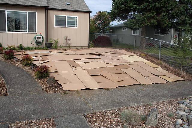 Photos going grassless in my front yard for Grassless garden designs
